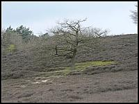 images/stories/20060430_Holandia/800_P1020621_Drzewko.JPG