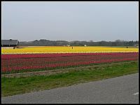 images/stories/20060501_Holandia/800_P1020772_Tulipany.JPG