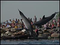 images/stories/20060503_Holandia/800_P1030472_Delfiny.JPG